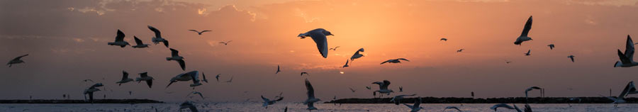 pássaros na praia representando paz